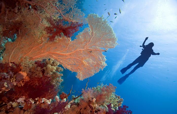 Ce spui de niscaiva timp petrecut sub apă, în Sharm El Sheikh