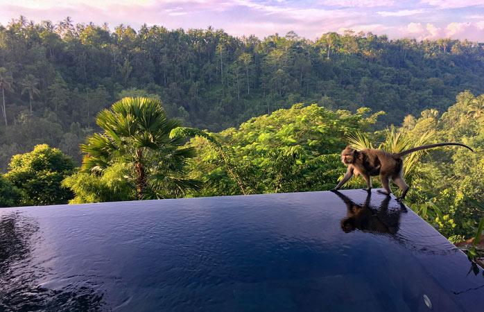 A avea noroc cu carul poate fi definit și ca o combinație dintre o piscină superbă și o priveliște încă și mai și, undeva într-o pădure din Bali