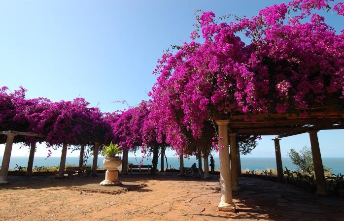 Flori de grădină pe coasta din Maputo