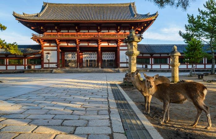Parcul Nara oferă casă unor drăgălașe căprioare sălbatice