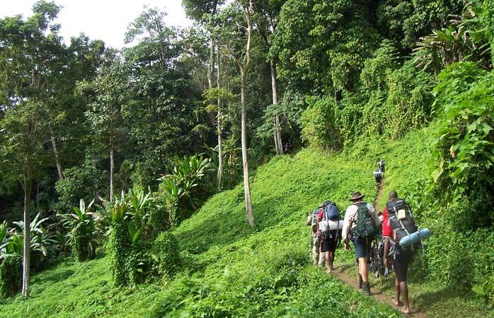 Afundați în pădurile din Papua Noua Guinee, drumeții trebuie că urmează negreșit traseul Kokoda