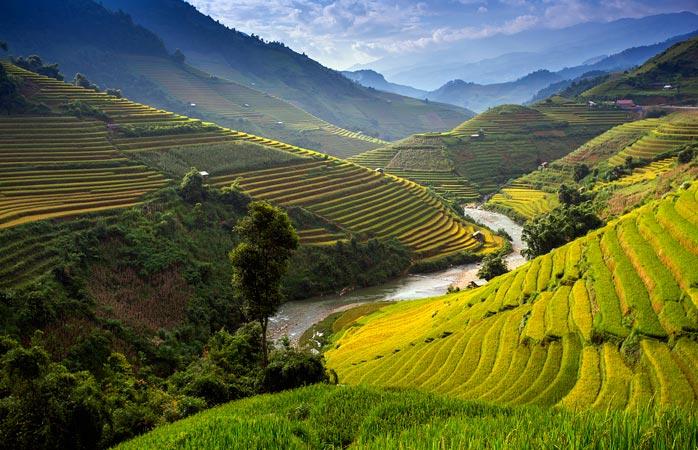 Câmpuri nesfârșite de un verde mai aprig decât buzunarul unui adept rastafari