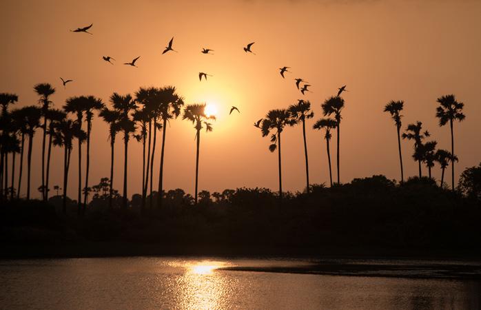 Zvente se înalță spre cer siluete de palmier