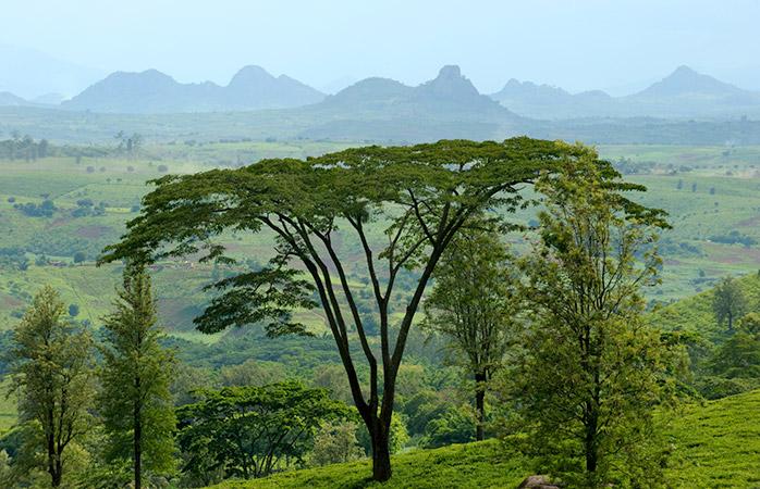 Pentru iubitorii de natură altruiști, Mozambique este destinația perfectă pentru luna de miere.