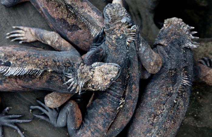 Reptilele par să știe mai bine ca oricine ce înseamnă viața într-o comunitate. Strânsă